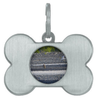 What Do You Think You're Doing? Pet ID Tag