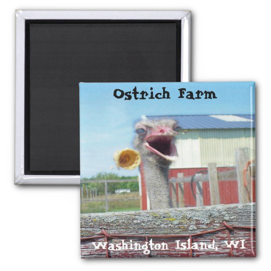 What No Ice Cream - Ostrich Farm Magnet