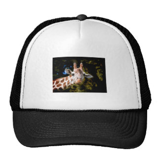 what, WHAT!? Trucker Hats