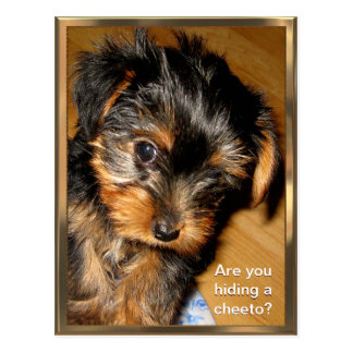 What you hiding? Customizable Postcard