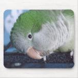 Whatcha Doin'? Quaker Parakeet Mouse Pads