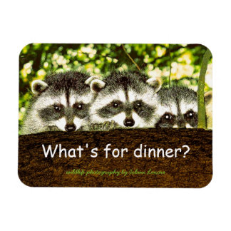 What's for dinner? Raccoon refrigerator magnet. Magnet