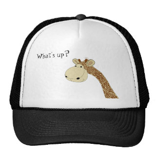 Whats up mesh hats