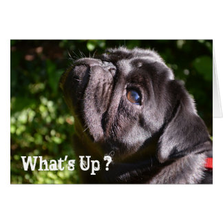What's Up - Black Pug Card