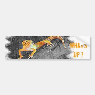 What's UP? Gecko, leopard gecko, Bumper Sticker