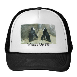 What's Up ??? Penguins Trucker Hats