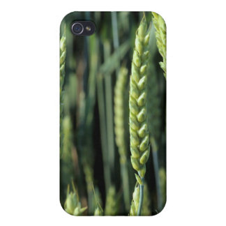 Wheat Field 3 iPhone 4/4S Case