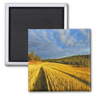 Wheat Field After Harvest Square Magnet
