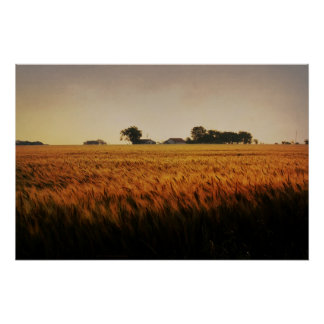 Wheat Field at Sunrise Poster