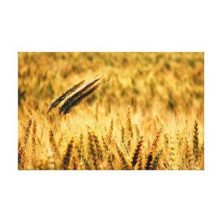 Wheat field gallery wrap canvas