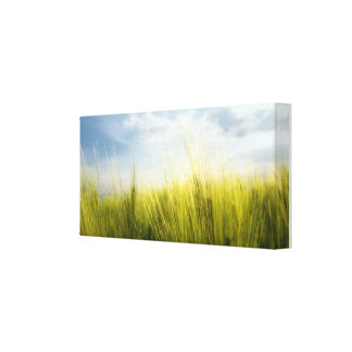 wheat field gallery wrapped canvas