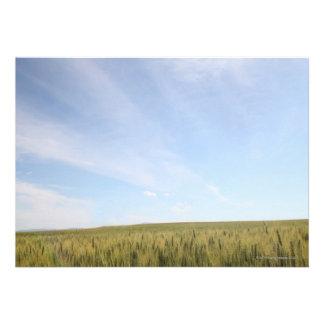 Wheat Field Invitation