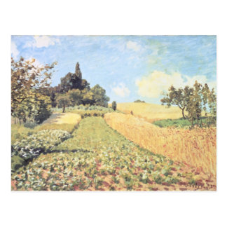 Wheat Field (oil on canvas) Postcard