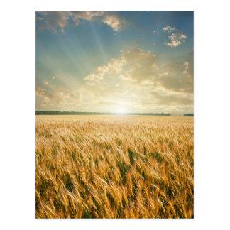 Wheat field on sunset postcard