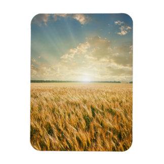 Wheat field on sunset rectangular photo magnet
