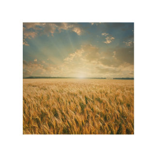 Wheat field on sunset wood canvases