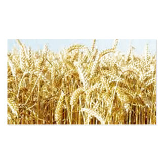Wheat Field Pack Of Standard Business Cards