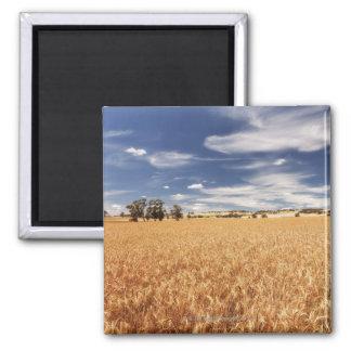 Wheat field, Victoria, Australia Magnet