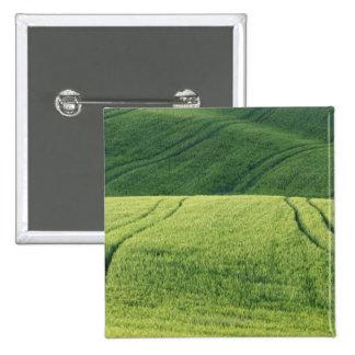 Wheat Field with Tire Tracks, Pienza, Val 15 Cm Square Badge