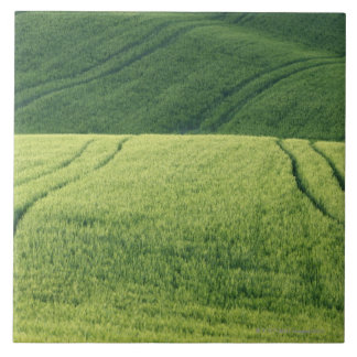 Wheat Field with Tire Tracks, Pienza, Val Large Square Tile