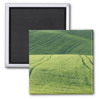 Wheat Field with Tire Tracks, Pienza, Val Square Magnet