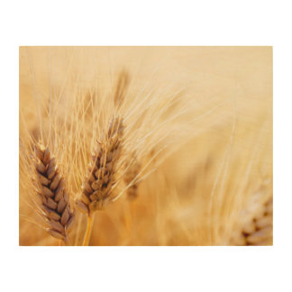 Wheat field wood canvases