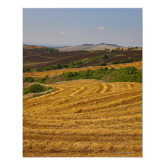 Wheat fields after harvest poster
