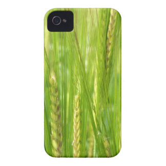 Wheat Fields iPhone 4 Cases