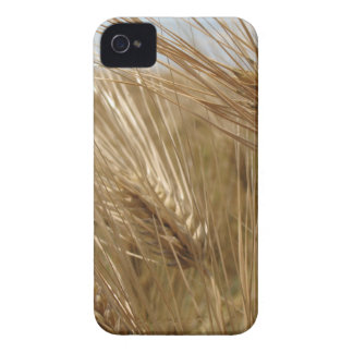 Wheat Fields iPhone 4 Covers