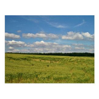 Wheat Fields Postcard