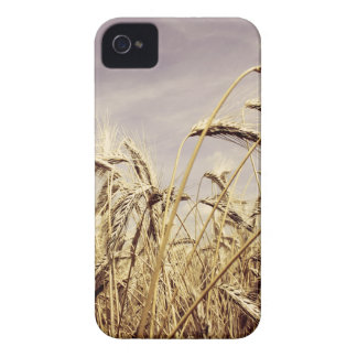 Wheat In The Wind Design iPhone 4 Covers