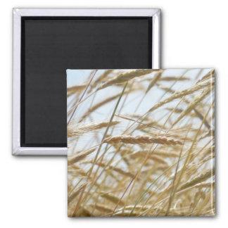 Wheat & Sky Magnet