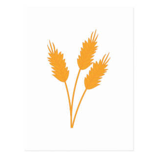 Wheat Stalk Postcard