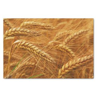 Wheat Tissue Paper