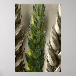 Wheat Wheat Poster