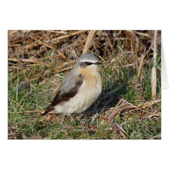 """Wheatear"" Card"