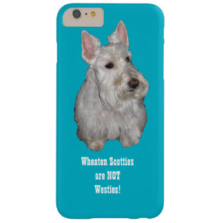 Wheaten Scotties are NOT Westies! Turquoise backgr Barely There iPhone 6 Plus Case