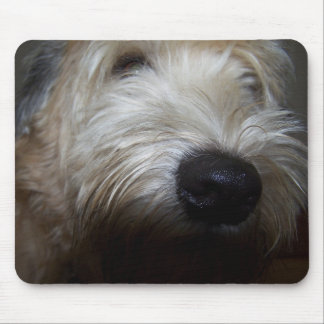 Wheaten Terrier Dog Face Mouse Pad