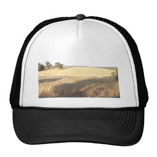 Wheatfield At Williams Farm In Western Australia Mesh Hat