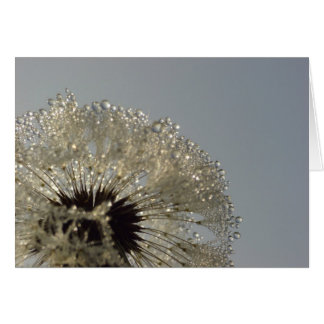 Wheel of droplets - Dandelion with droplets Greeting Card
