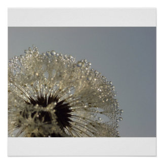 Wheel of droplets - Dandelion with droplets Poster