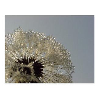 Wheel of droplets postcard