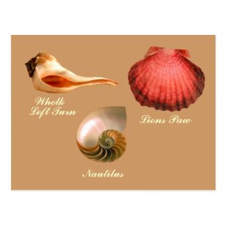 Whelk Left Turn,  Nautilus, Lions Paw Postcard