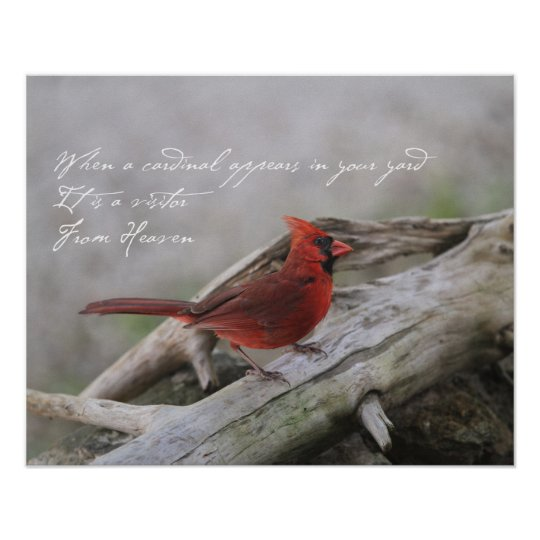 When a cardinal appears in your yard.... poster