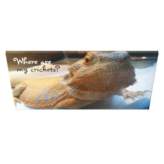 Where are my crickets Fun Orange Bearded Dragon Canvas Print