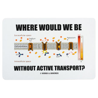 Where Would We Be Without Active Transport? Floor Mat