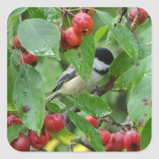 Where's Chickadee? Square Sticker