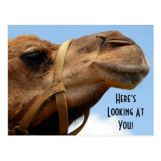 "Whimsical ""Here's Looking At You"" Camel Greeting Postcard"