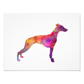 Whippet in watercolor photo print