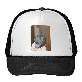 Whiskered Auklet chick Trucker Hat